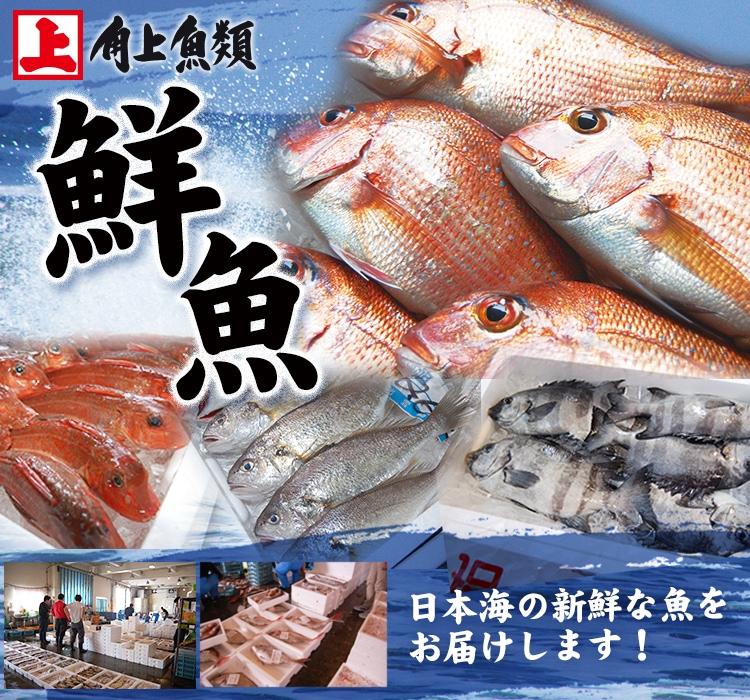 角上の鮮魚