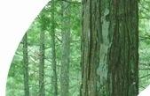 森林の香り/白馬 フォーレスト