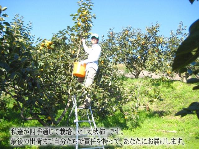私達が四季を通じて栽培した「太秋柿」です。最後の出荷まで自分たちで責任を持って、あなたにお届けします。
