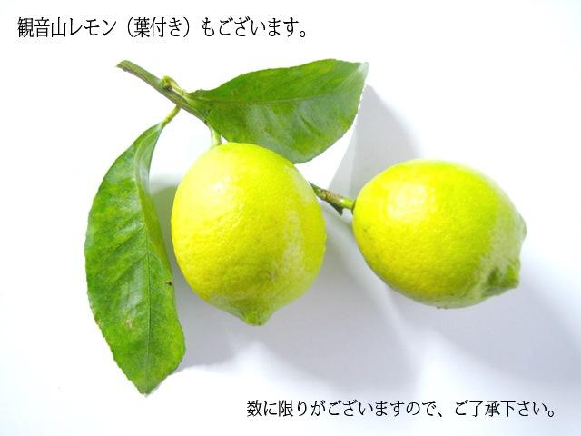 国産レモン(葉付き)