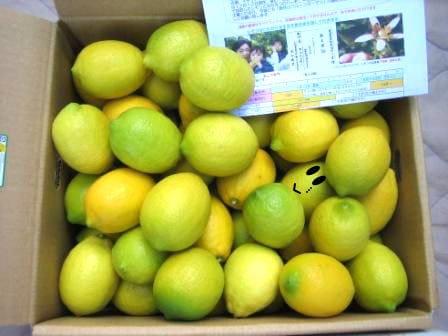 農家直送の国産レモン