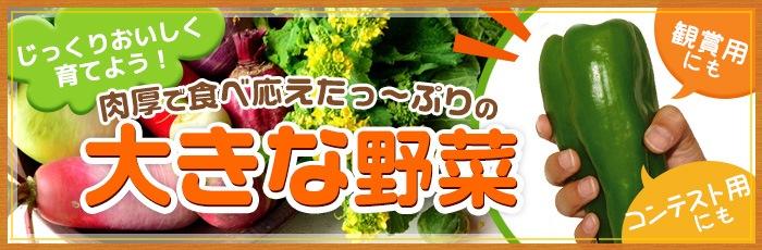 大きな野菜
