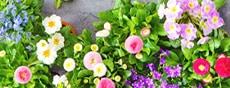 花の種・苗