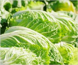 旬の時期に栽培するのが一番いいものが収穫できる事が多いです。まずは旬の時期に栽培して、上手く栽培してください。