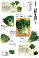 やさいの時間 細雪水菜、友禅中生水菜の紹介