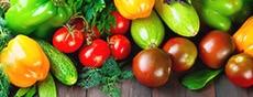 野菜の種・苗
