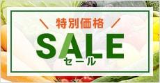 小林種苗 特別価格セール