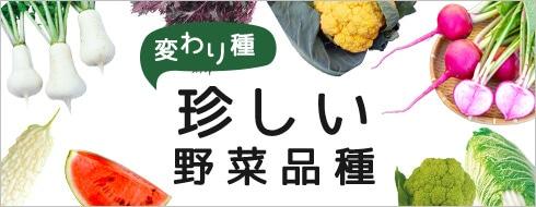 HOT ITEM 定番・人気 野菜品種