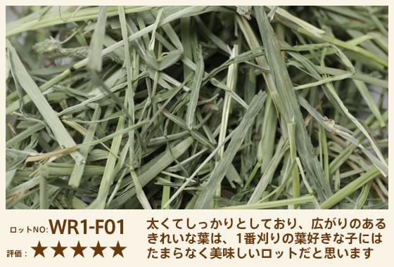 ワードルー1番刈り WR1-E01