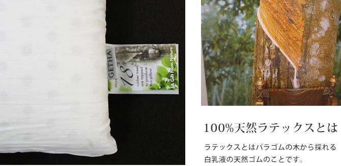 100%天然ラテックスとは ラテックスとはパラゴムの木から採れる白乳液の天然ゴムのことです。