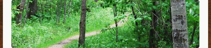 Michel CT ミシェルは、森林に配慮