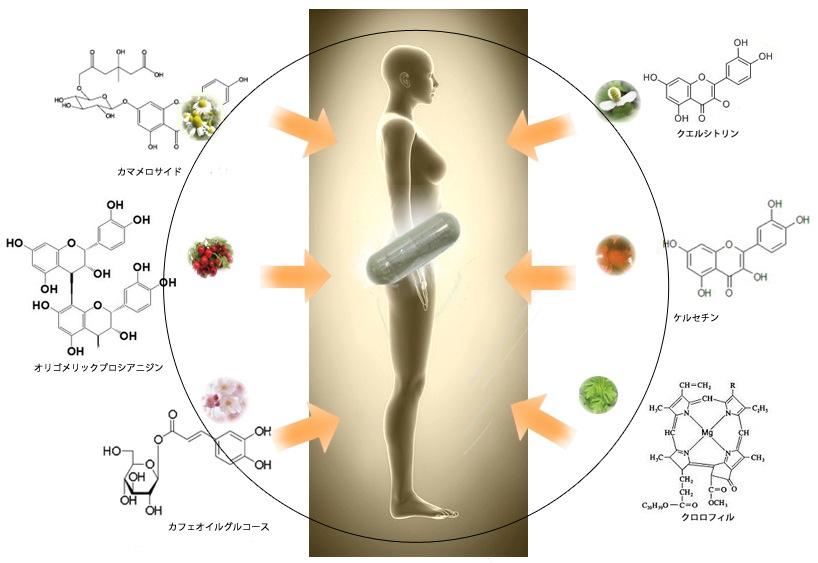 抗糖化成分説明図