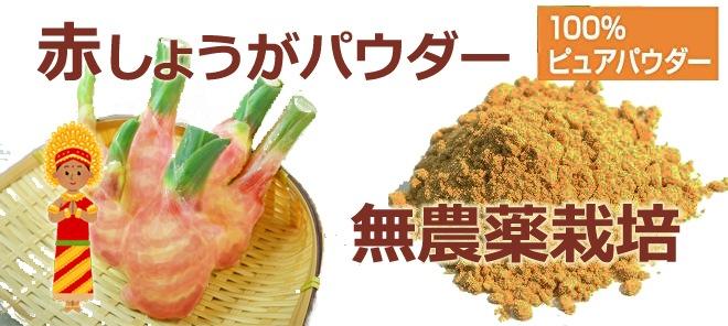 無農薬・化学肥料不使用 赤しょうがパウダー(微粉末)