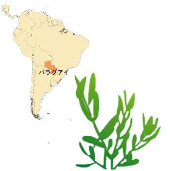 南米パラグアイ