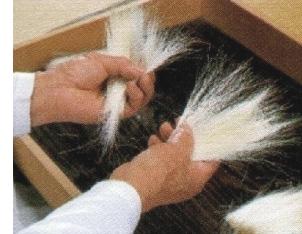 赤ちゃん筆の選毛、毛組み