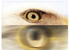 高倍率と大口径レンズでの優れた性能