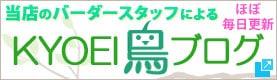 KYOEI 鳥ブログ