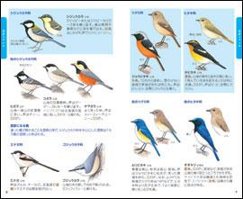 見る読むわかる野鳥図鑑の内容