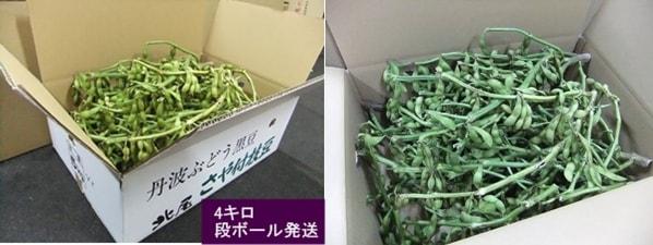 黒豆枝豆 4kg