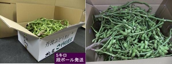 黒豆枝豆 5kg