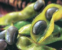 冷凍黒豆枝豆(台湾産)