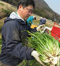 2.壬生菜の収穫