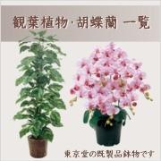 人工観葉植物・胡蝶蘭(造花)商品一覧