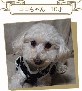 ココちゃん 10才