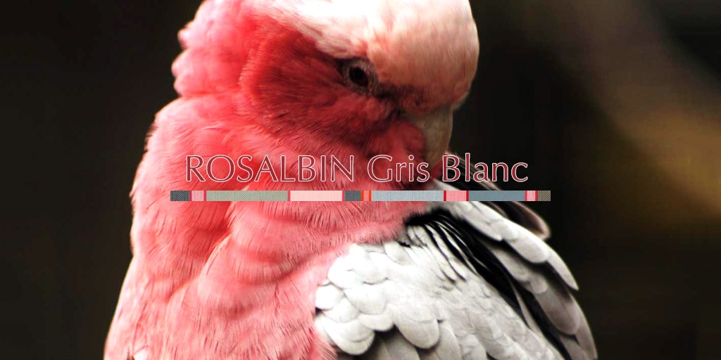 2019Printemps ロザルバン グリ ブラン/ROSALBIN  Gris Blanc