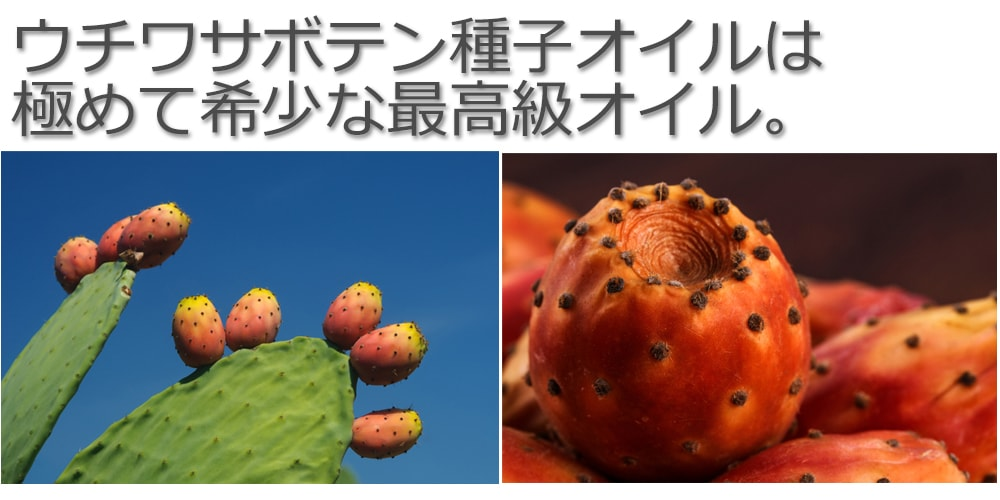 ウチワサボテンは種子オイルは極めて希少な最高級オイル