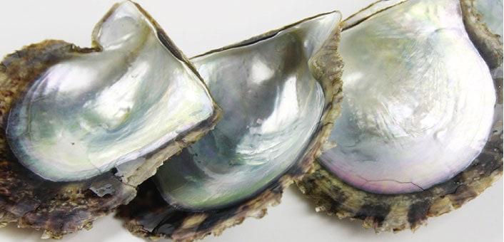 真珠についてイメージ