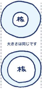 大きさのイメージ図