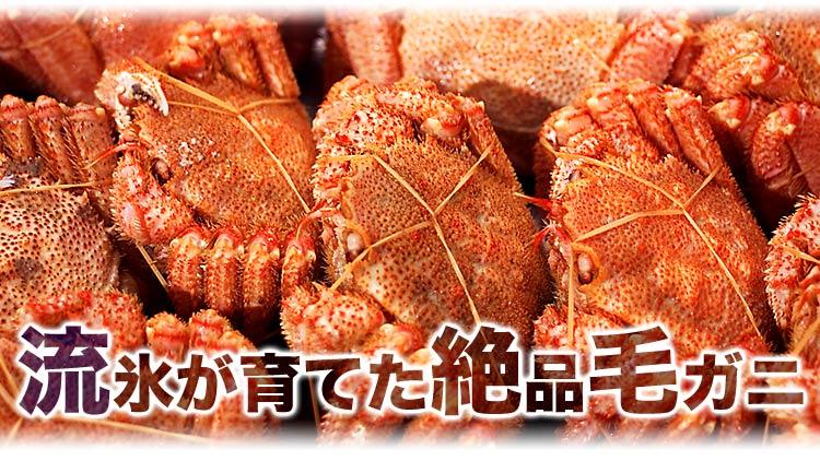 流氷が育てた超希少な堅毛蟹