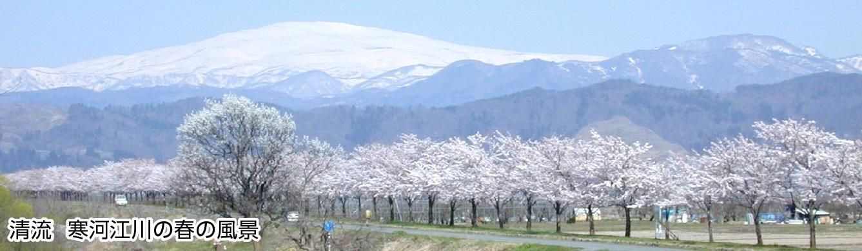 清流 寒河江川の春の風景