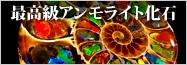 アンモライト化石
