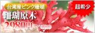 台湾産ピンク珊瑚原木