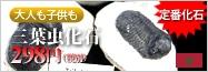 定番!古代生物!三葉虫化石!