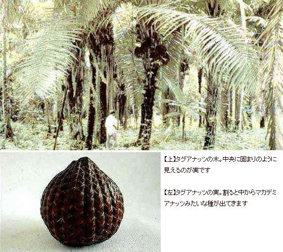 タグアナッツ