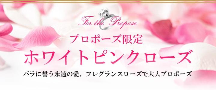 プロポーズ限定 ホワイトピンクローズ