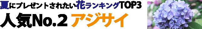 夏にプレゼントされたい花ランキングTOP3 人気No.2アジサイ