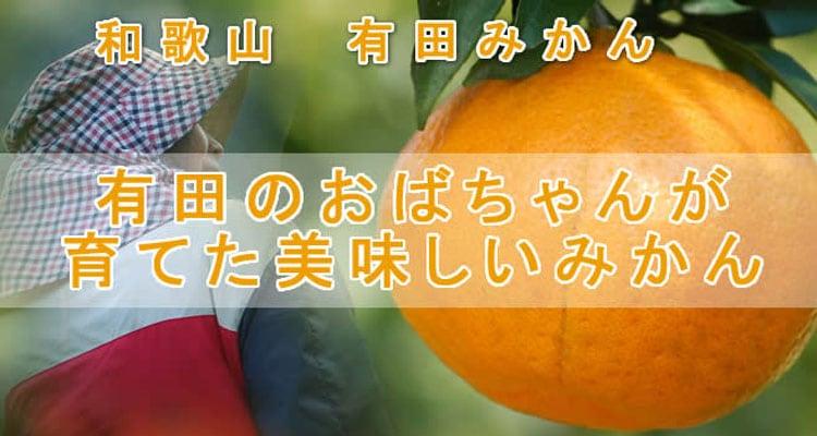 早春の柑橘