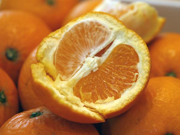森本農園さとおばちゃんの【倉置き】きよみオレンジ