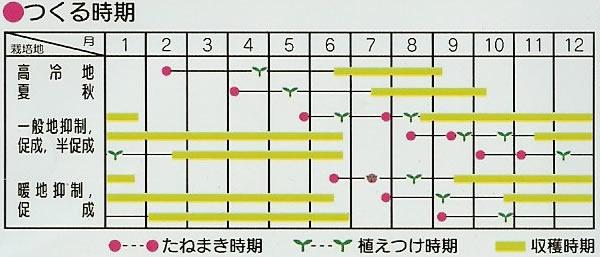 トマト種 アイコ(18粒)〜サカタ交配〜