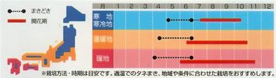 マリーゴールド アイシスミックス(1ml) 〜花のタネ〜
