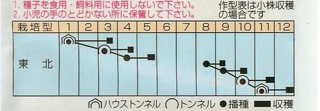からし菜 種 赤リアスからし菜(20ml)