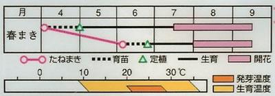 朝顔 大輪咲混合(1.5ml) 〜花のタネ〜