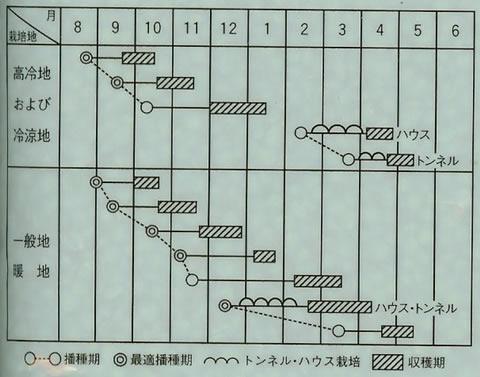 ホウレンソウ種子 アトラス法蓮草 1L
