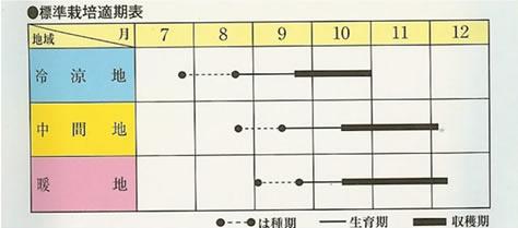 ダイコン種 ビタミン大根(5ml)