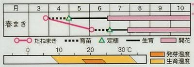 フレンチマリーゴールド ボナンザ混合(1ml) 〜花のタネ〜