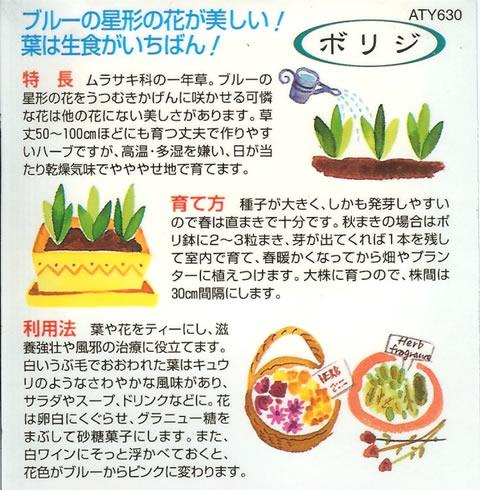 ハーブ種 ボリジ(1ml)